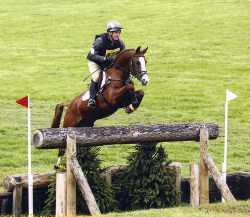 Eventing horse